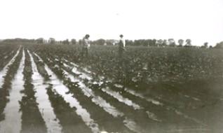 Irrigating beets 1913