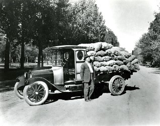 Wellington potatoes 1918