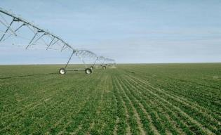 Winter wheat irrigation