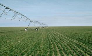 Winter wheat irrigation